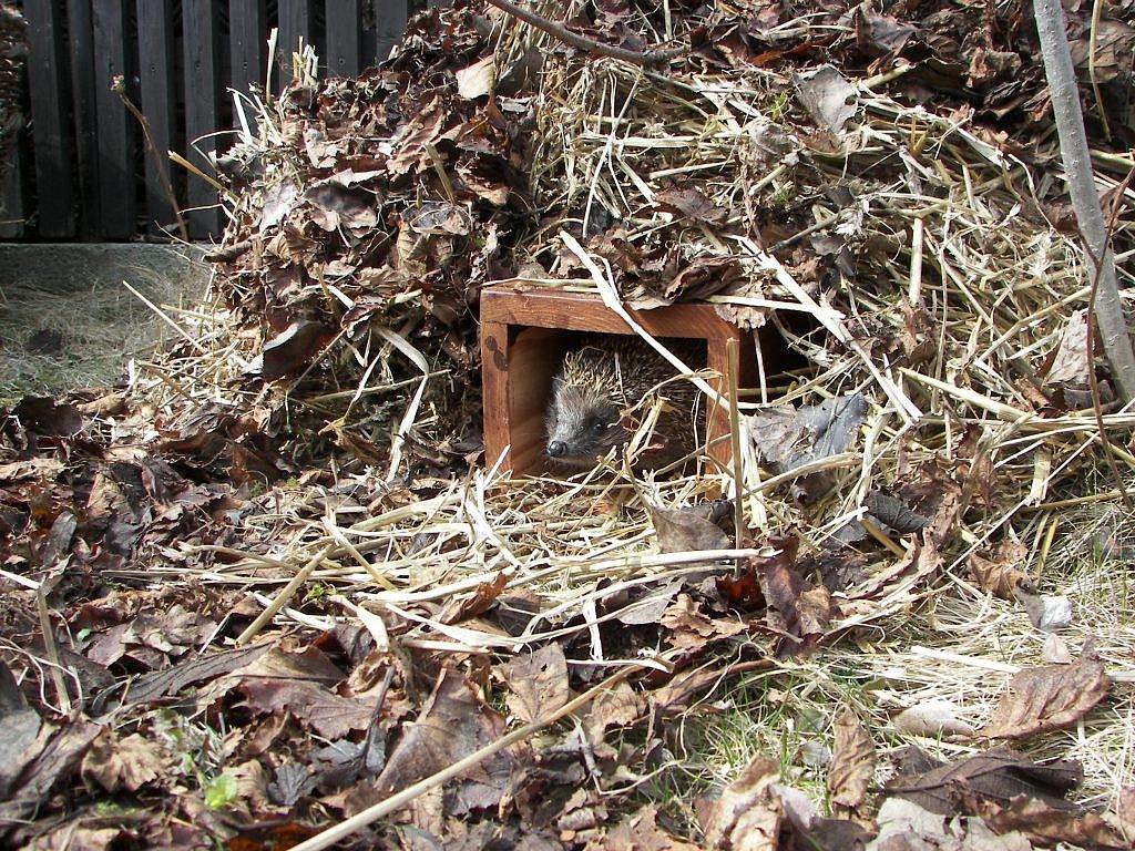Výsledek obrázku pro ježek čsop vlašim